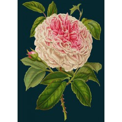 Carte double GM & env. 'MIDNIGHT BOTANICAL' (roses)
