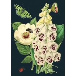 Carte double GM et enveloppe - Midnight Botanical (white bell)