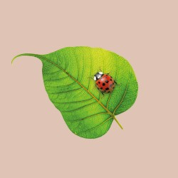 20 Serviettes 100% Bambou 33x33 cm Ladybug - Chic Mic