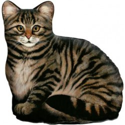 Cale-Porte Chat 'Brown Tabby'