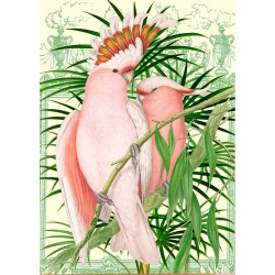 Carte double GM & env. 'WHIMSICAL' (pink parrot)