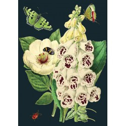 Carte double GM & env. 'MIDNIGHT BOTANICAL' (white bell)